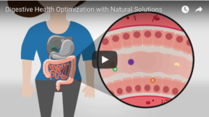 why digestion is so important